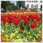 Viágok mindenütt